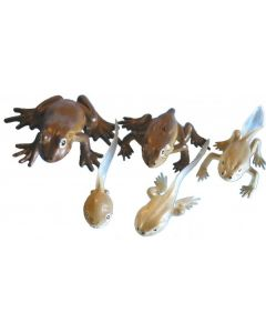 Life Cycle Frog Replicas 5pcs