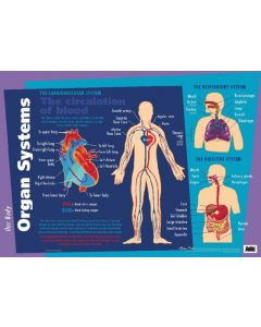 Poster Our Body Major Organs