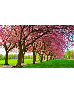 Welcome to Spring Playscene Backdrop