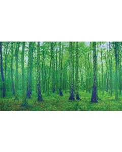 Into the Forest Playscene Backdrop 3mW x 1.7mH