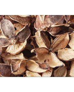 Dried Seedless Cotton Pods 50g